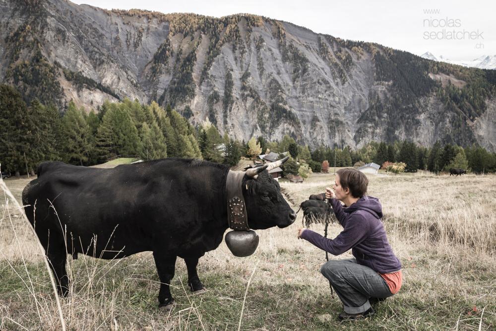 Virginie Jean : « Je ressens les messages des vaches dans mon corps. »